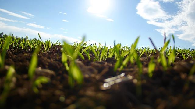 zasetá tráva