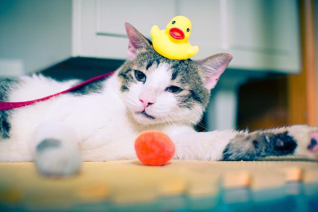 kočka s hračkami