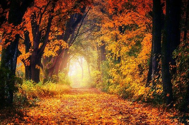 oranžová cesta