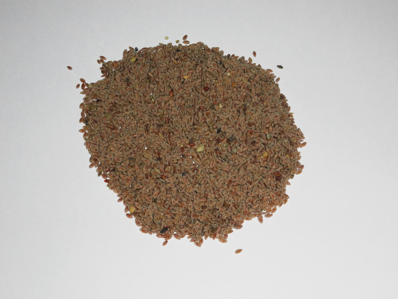 ispaghol_seeds